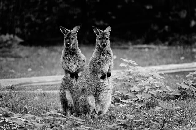 Australie une faune à découvrir