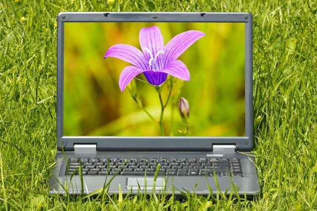 14085836 – laptop computer with beautiful flower  on screen