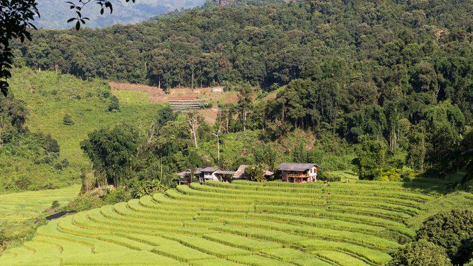 Les réserves naturelles à ne pas manquer en Thaïlande